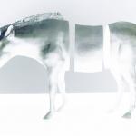 zebra - 2004